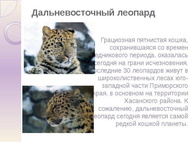 Дальневосточный леопард Грациозная пятнистая кошка, сохранившаяся со времен ледникового периода, оказалась сегодня на грани исчезновения. Последние 30 леопардов живут в широколиственных лесах юго-западной части Приморского края, в основном на террит…