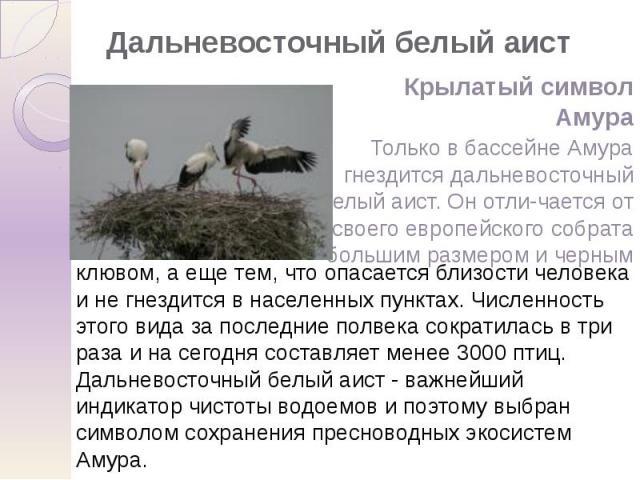 Дальневосточный белый аист Крылатый символ Амура Только в бассейне Амура гнездится дальневосточный белый аист. Он отли-чается от своего европейского собрата большим размером и черным