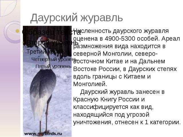 Даурский журавль