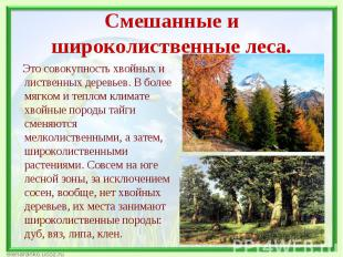 Это совокупность хвойных и лиственных деревьев. В более мягком и теплом климате