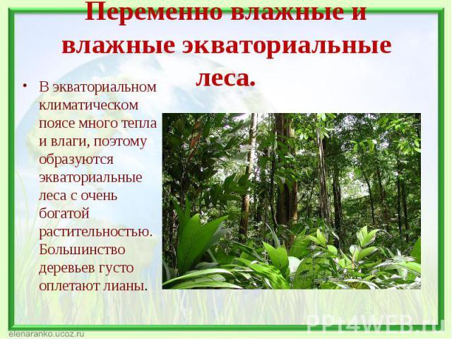 В экваториальном климатическом поясе много тепла и влаги, поэтому образуются экваториальные леса с очень богатой растительностью. Большинство деревьев густо оплетают лианы. В экваториальном климатическом поясе много тепла и влаги, поэтому образуются…