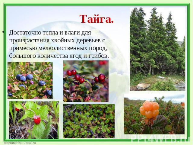 Достаточно тепла и влаги для произрастания хвойных деревьев с примесью мелколиственных пород, большого количества ягод и грибов. Достаточно тепла и влаги для произрастания хвойных деревьев с примесью мелколиственных пород, большого количества ягод и…