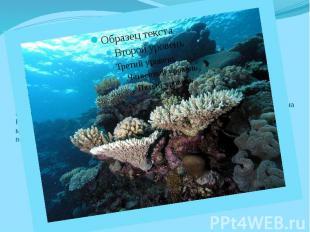 История происхождения Современная история развития Большого Кораллового рифа дли