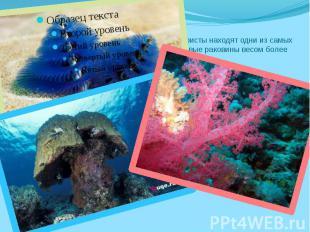 На Большом Барьерном Рифе Австралиитуристы находят одни изсамых крас