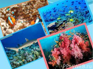 Большой барьерный риф является одной из самых разнообразных экосистем в мире. Зд