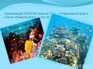 Организация ЮНЕСКО внесла Большой барьерный риф в список объектов всемирного нас