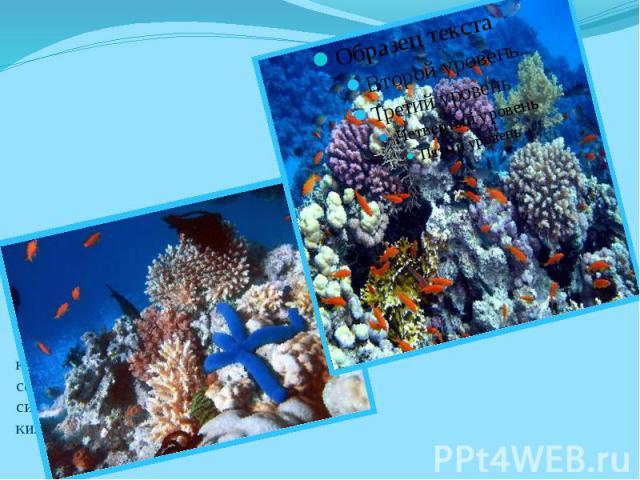Большой барьерный риф — самая большая популяция коралловых полипов сформировавших рифовую систему длиной более 2600 километров.