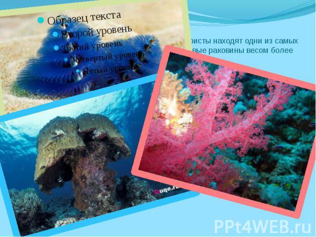 На Большом Барьерном Рифе Австралиитуристы находят одни изсамых красивых раковин вмире. Гигантские моллюсковые раковины весом более двухсот килограмм неявляются редкостью.