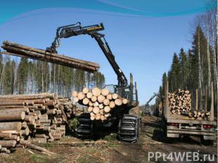 Главные причины этого заключаются в следующем: вырубке лесов с целью получения д