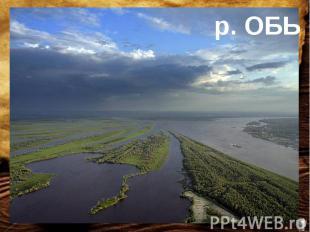 У этой реки с координатами 65ºс.ш. 65ºв.д. 150000 притоков.