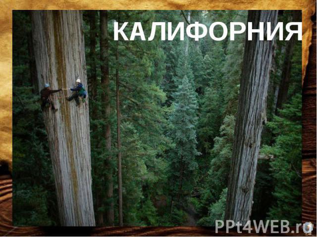 Стволы самого высокого дерева на Земле достигают в высоту 100 метров и более, а в диаметре 6-10 метров. Живут эти деревья до 2000 лет, а растут в районе с координатами 26ºс.ш. 112ºз.д. Найдите место, где обитают гиганты растительного мира.