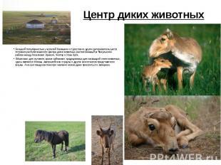 Центр диких животных Большой популярностью у жителей Калмыкии и туристов из друг