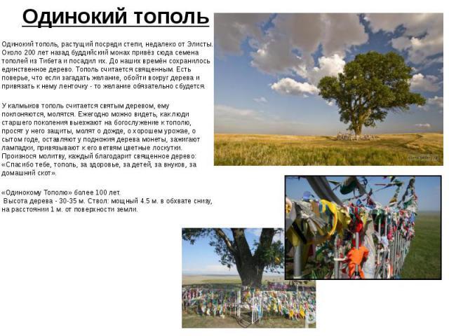 Одинокий тополь Одинокий тополь, растущий посреди степи, недалеко от Элисты. Около 200 лет назад буддийский монах привёз сюда семена тополей из Тибета и посадил их. До наших времён сохранилось единственное дерево. Тополь считается священным. Есть по…