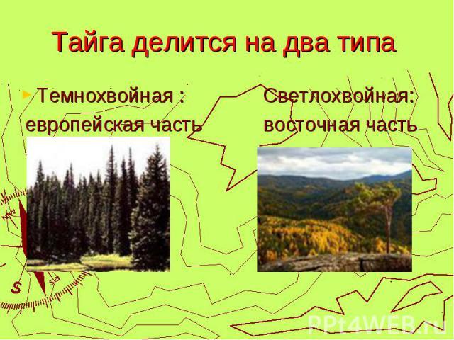 Тайга делится на два типа Темнохвойная : Светлохвойная: европейская часть восточная часть