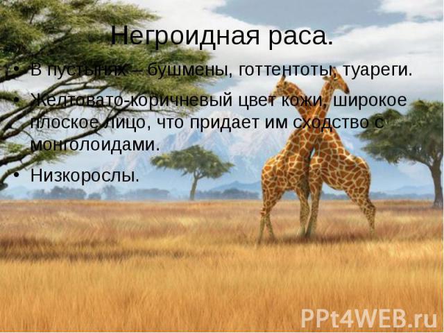 Негроидная раса. В пустынях – бушмены, готтентоты, туареги. Желтовато-коричневый цвет кожи, широкое плоское лицо, что придает им сходство с монголоидами. Низкорослы.