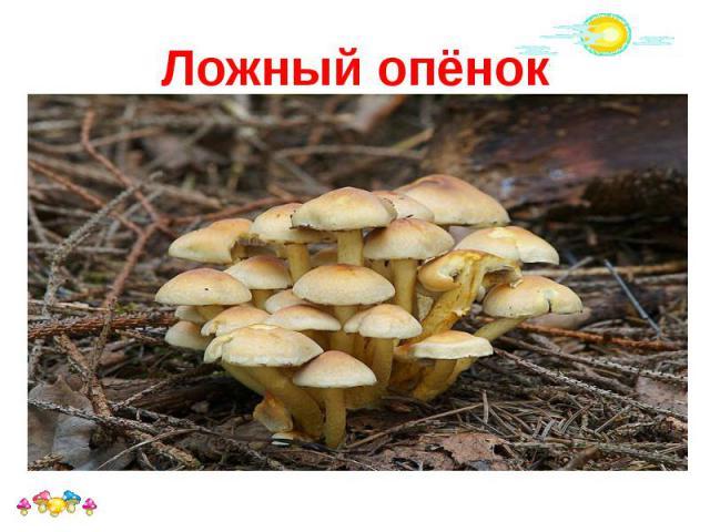 Ложный опёнок Ложный опёнок, ложноопёнок — название нескольких видов ядовитых или несъедобных грибов, внешне похожих на съедобные опята ложные опята легко отличаются по отсутствию у них кольца на ножке