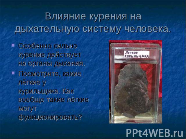Особенно сильно курение действует на органы дыхания. Особенно сильно курение действует на органы дыхания. Посмотрите, какие лёгкие у курильщика. Как вообще такие лёгкие могут функционировать?