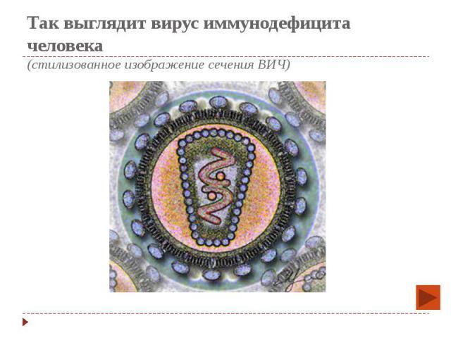Так выглядит вирус иммунодефицита человека (стилизованное изображение сечения ВИЧ)