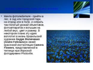 Инсталляция Camera Flowers. Клумбы, где цветут фотокамеры  Меч