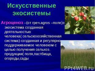 Агроценоз –(от греч.agros –поле)это экосистема созданная деятельностью человека(