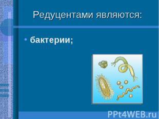 бактерии; бактерии;