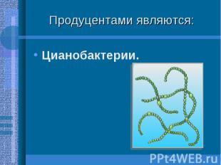Цианобактерии. Цианобактерии.