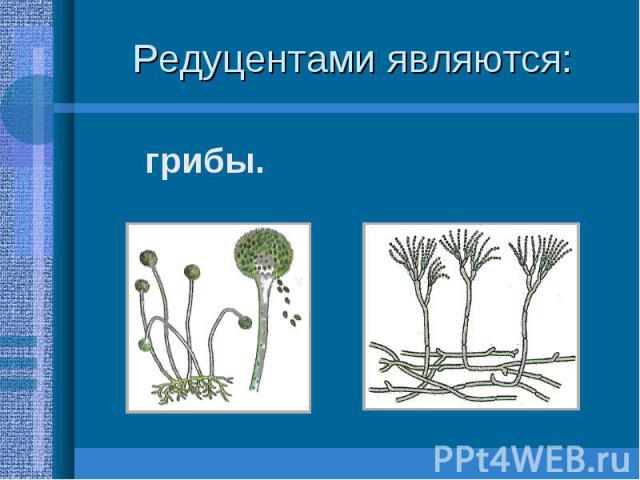 грибы. грибы.