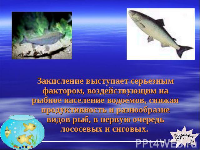 Закисление выступает серьезным фактором, воздействующим на рыбное население водоемов, снижая продуктивность и разнообразие видов рыб, в первую очередь лососевых и сиговых. Закисление выступает серьезным фактором, воздействующим на рыбное население в…