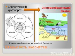 Открытость экосистем Биологический круговорот-----