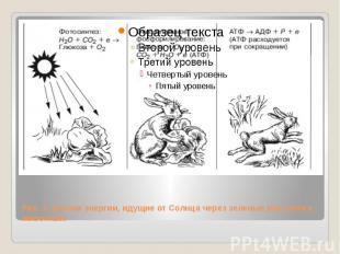 Рис. 2. Потоки энергии, идущие от Солнца через зеленые растения к животным