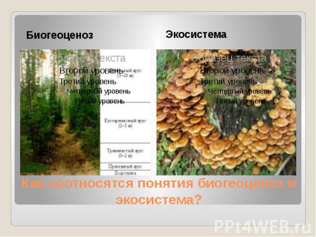Как соотносятся понятия биогеоценоз и экосистема? Биогеоценоз