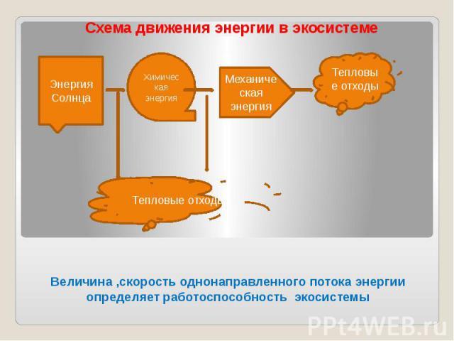 Величина ,скорость однонаправленного потока энергии определяет работоспособность экосистемы Схема движения энергии в экосистеме