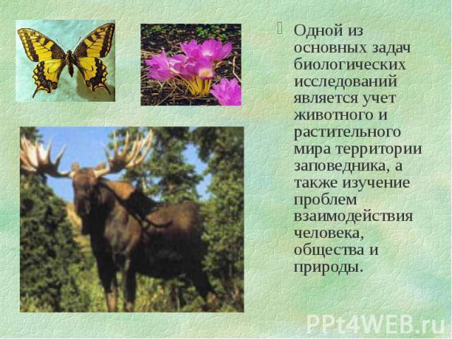 Одной из основных задач биологических исследований является учет животного и растительного мира территории заповедника, а также изучение проблем взаимодействия человека, общества и природы. Одной из основных задач биологических исследований является…