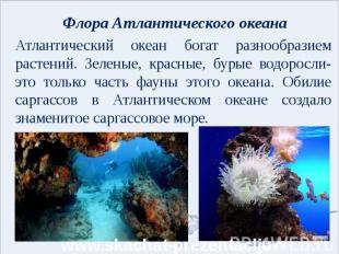 Флора Атлантического океана Атлантический океан богат разнообразием растений. Зе