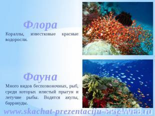 Кораллы, известковые красные водоросли. Много видов беспозвоночных, рыб, среди к