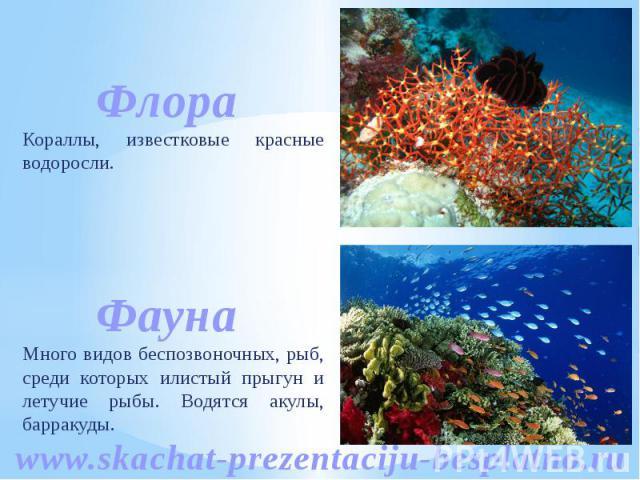 Кораллы, известковые красные водоросли. Много видов беспозвоночных, рыб, среди которых илистый прыгун и летучие рыбы. Водятся акулы, барракуды.