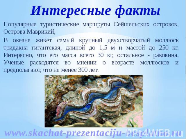 Популярные туристические маршруты Сейшельских островов, Острова Маврикий, Популярные туристические маршруты Сейшельских островов, Острова Маврикий, В океане живет самый крупный двухстворчатый моллюск тридакна гигантская, длиной до 1,5 м и массой до …