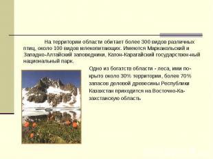 На территории области обитает более 300 видов различных птиц, около 100 видов мл