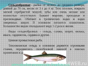 Сельдеобразные- рыбки от мелких до среднего размера, длиной до 70 см, весо