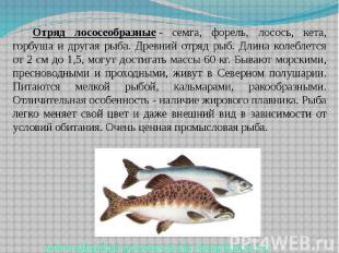 Отряд лососеобразные- семга, форель, лосось, кета, горбуша и другая рыба.