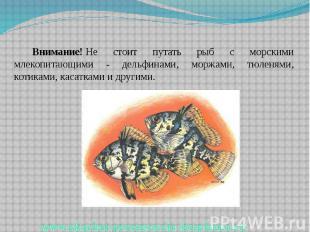 Внимание!Не стоит путать рыб с морскими млекопитающими - дельфинами, моржа