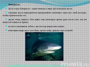 Интересно: Интересно: акула озера Никарагуа - единственная в мире пресноводная а