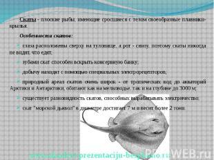 Скаты- плоские рыбы, имеющие сросшиеся с телом своеобразные плавники-крыль