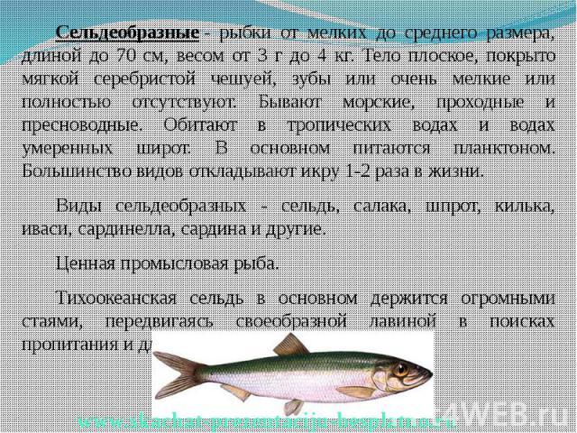 Сельдеобразные- рыбки от мелких до среднего размера, длиной до 70 см, весом от 3 г до 4 кг. Тело плоское, покрыто мягкой серебристой чешуей, зубы или очень мелкие или полностью отсутствуют. Бывают морские, проходные и пресноводные. Обитают в т…