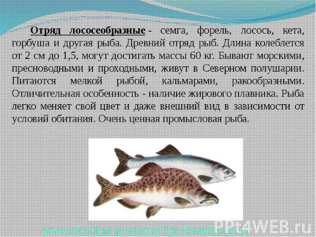 Отряд лососеобразные- семга, форель, лосось, кета, горбуша и другая рыба. Древний отряд рыб. Длина колеблется от 2 см до 1,5, могут достигать массы 60 кг. Бывают морскими, пресноводными и проходными, живут в Северном полушарии. Питаются мелкой…