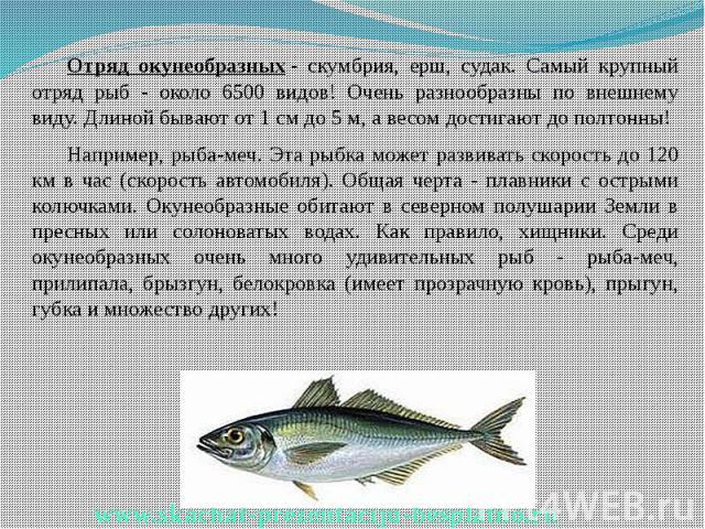 Отряд окунеобразных- скумбрия, ерш, судак. Самый крупный отряд рыб - около 6500 видов! Очень разнообразны по внешнему виду. Длиной бывают от 1 см до 5 м, а весом достигают до полтонны! Отряд окунеобразных- скумбрия, ерш, судак. Самый кру…