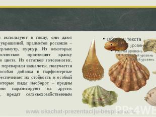 Моллюсков используют в пищу, они дают сырье для украшений, предметов роскоши – ж