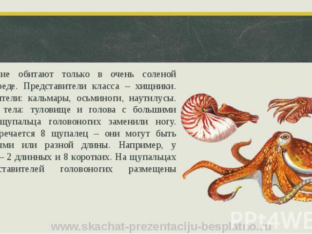 Головоногие обитают только в очень соленой водной среде. Представители класса – хищники. Представители: кальмары, осьминоги, наутилусы. Строение тела: туловище и голова с большими глазами, щупальца головоногих заменили ногу. Чаще встречается 8 щупал…