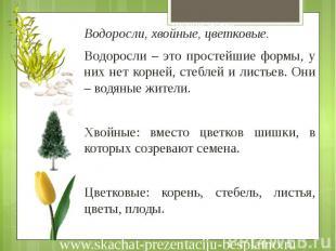 Низшая группа Водоросли, хвойные, цветковые. Водоросли – это простейшие формы, у