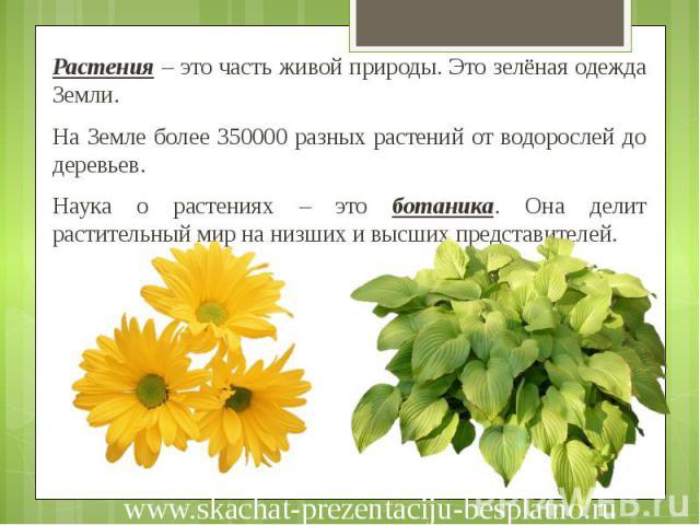Растения – это часть живой природы. Это зелёная одежда Земли. Растения – это часть живой природы. Это зелёная одежда Земли. На Земле более 350000 разных растений от водорослей до деревьев. Наука о растениях – это ботаника. Она делит растительный мир…
